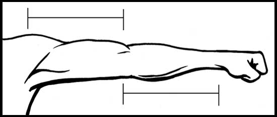 http://www.learn-to-draw.com/figure-drawing/03-draw-male-arm ...