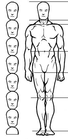 Пропорции в рисунке