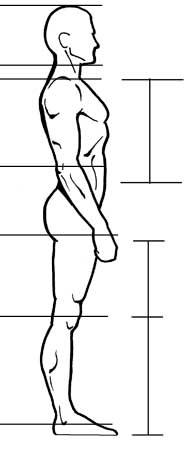 How To Draw The Human Figure Drawing Male Proportions