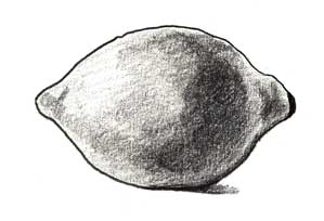 http://www.learn-to-draw.com/images/05-learn-shading-lemon-3b.jpg
